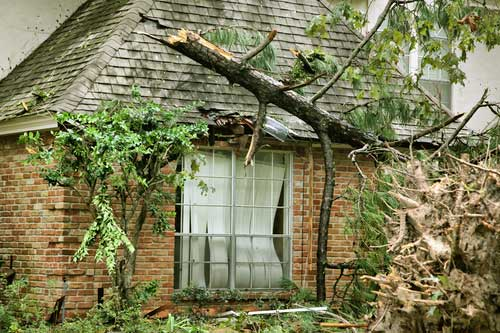 Click image for larger version.  Name:Tree-Damage.jpg Views:189 Size:45.8 KB ID:10118