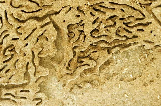 Name:  termites-inspection.jpg Views: 28 Size:  57.6 KB