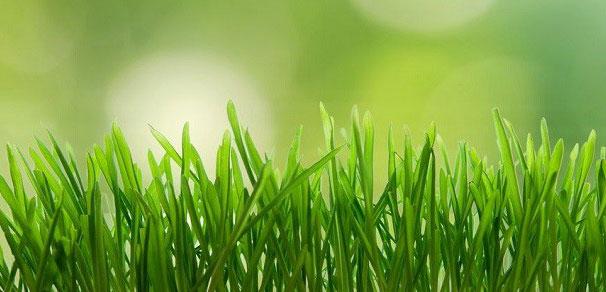 Name:  Lawn-Care.jpg Views: 67 Size:  43.3 KB