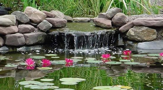Name:  pond.jpg Views: 384 Size:  61.3 KB