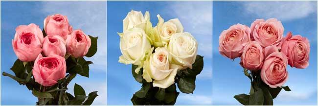 Name:  roses.jpg Views: 201 Size:  21.3 KB