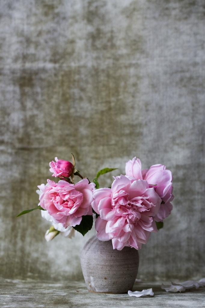 Name:  roses-828564_1280.jpg Views: 34 Size:  69.5 KB