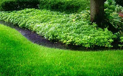 Click image for larger version.  Name:lawn-care.jpg Views:323 Size:29.9 KB ID:10551