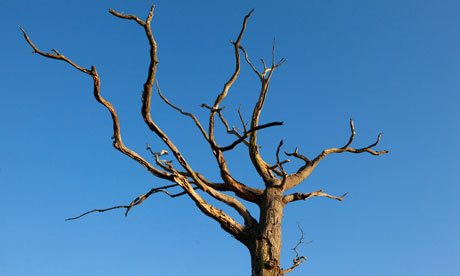 Click image for larger version.  Name:dead-tree.jpg Views:3719 Size:22.7 KB ID:10170